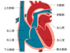血圧 拡張 高い 期